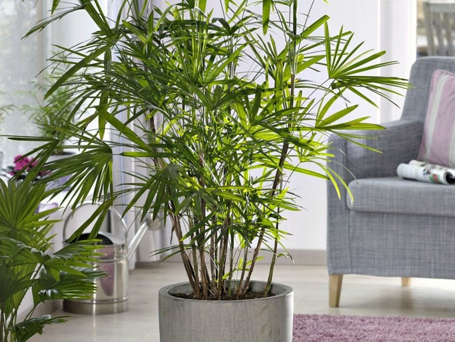 Plantas artificiales grandes en decoración